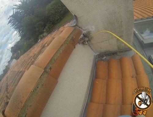 Destruction d'un nid de guêpe sur toiture à Bouguenais