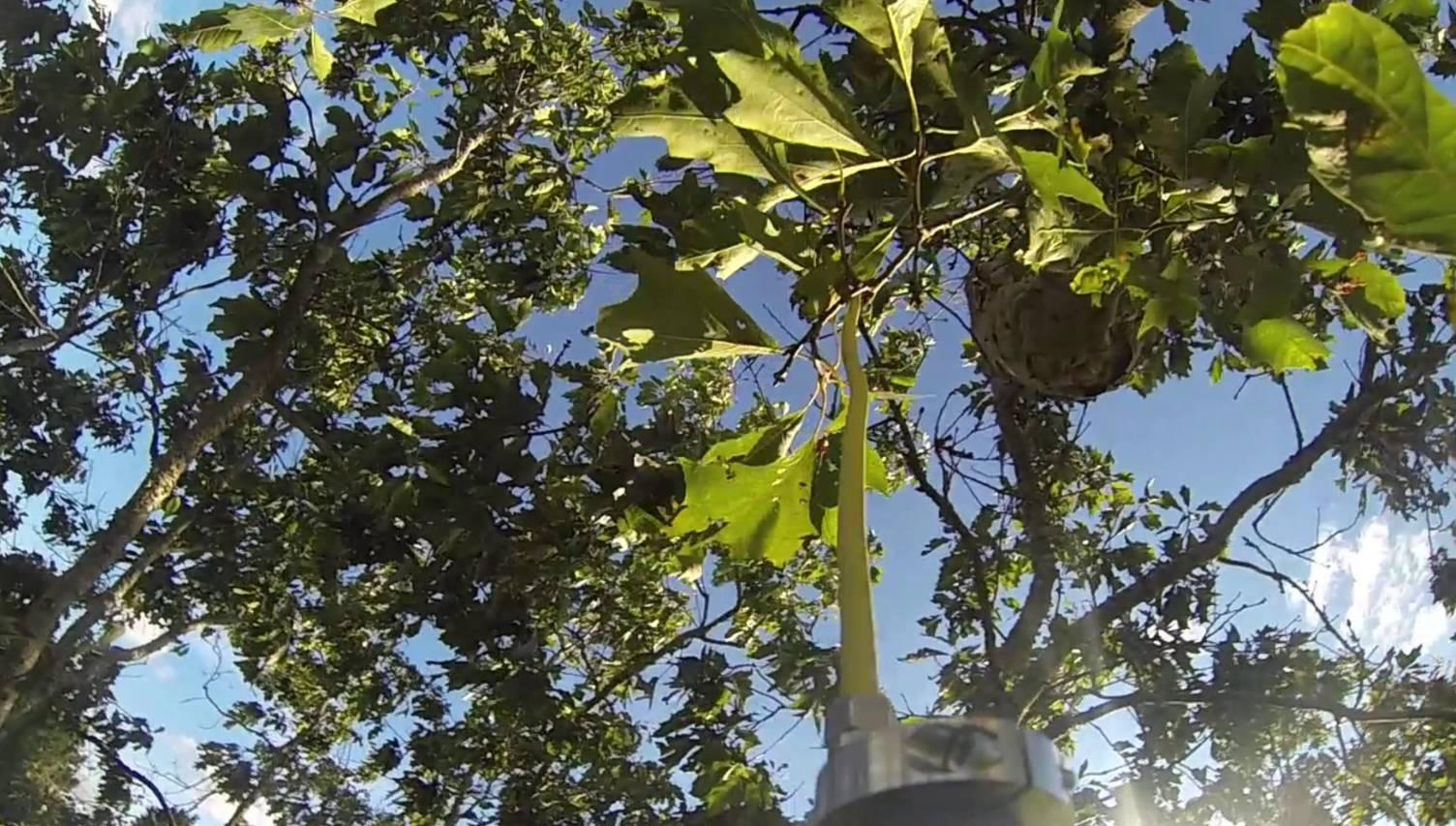 destruction nid frelons asiatiques saint jean de boiseau