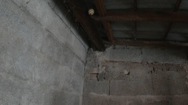 frelons asiatique le pellerin nid primaire